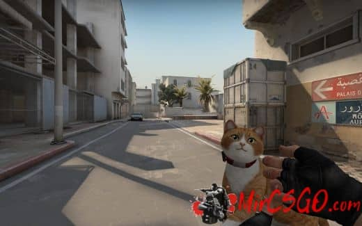 Cat Gun (SF2) Модель кс го